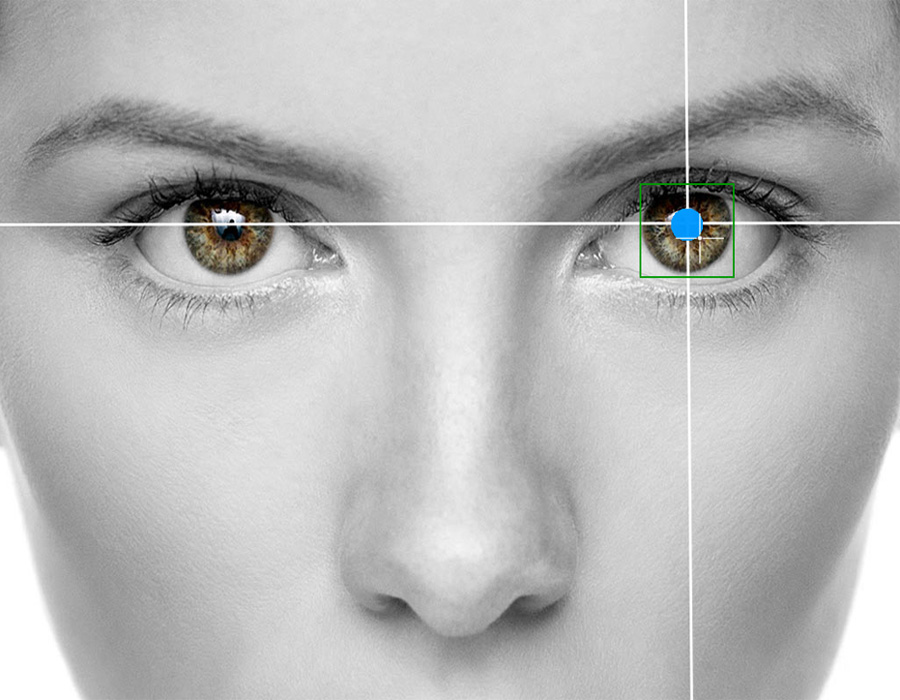Learn how eye tracking technology is used to study language processing in the brain.