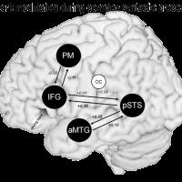 den-ouden-et-al-2012-neuroimage-7